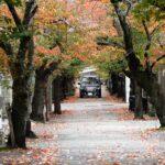 秋の桜の道
